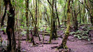 """""""Parque nacional de Garajonay"""" auf LA GOMERA"""